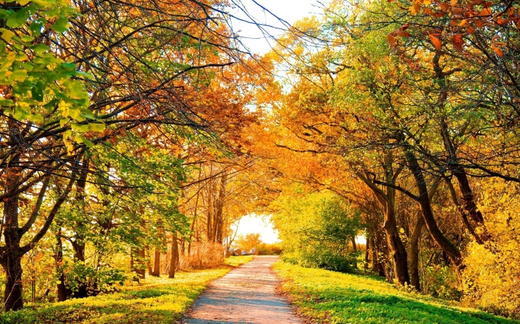 ws_Beautiful_Autumn_Trees_&_Path_2560x1600